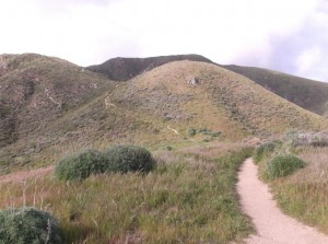 As you hike up the Rocky Ridge trail in Garrapata Park, you can hear sea lions barking.